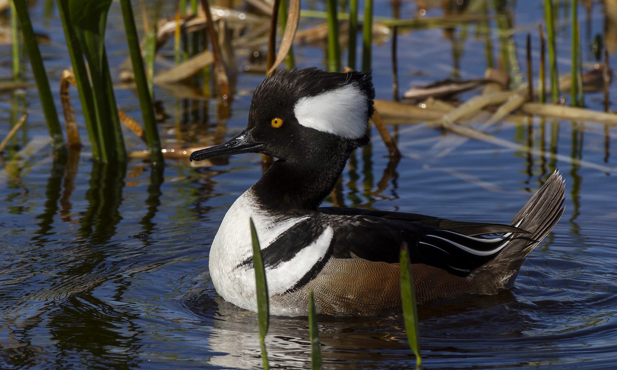 Edgar A. Mearns Bird Club